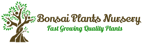 Bonsai Plants Nursery Coupons and Promo Code